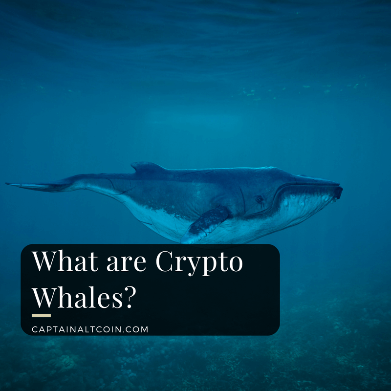 What are Crypto Whales