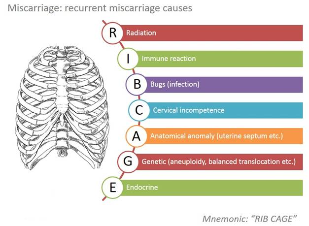 meaning of mnemonic